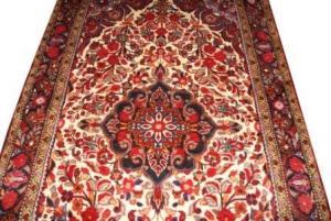 Persian Shiraz Qahquai (327079)