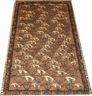 Persian Shiraz Qahquai (327120)
